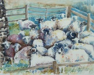 down from the hills - sheep in Troutbeck